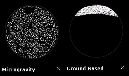 Examples of how coarsening appears in microgravity (left) vs. on Earth (right); revealing characteristics hidden by gravity is the goal of the CSLM-3 investigation traveling to the International Space Station on SpaceX Dragon. (Credit: NASA)