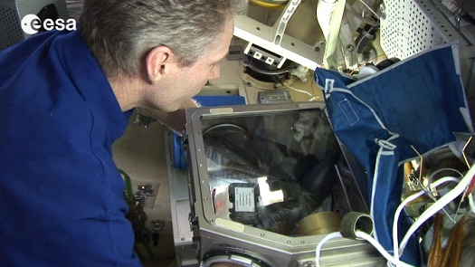 ESA astronaut Thomas Reiter performing a cell  experiment aboard the International Space Station. (Credit: ESA)
