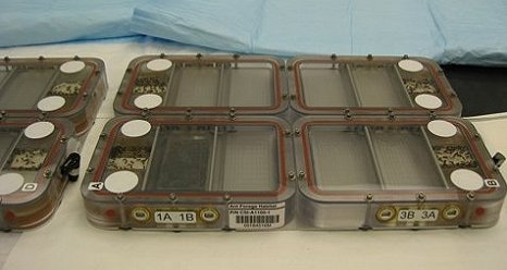 One of the new research investigations that arrived on the space station is the Commercial Generic Bioprocessing Apparatus Science Insert-06: Ants in Space. (Credit: BioServe Space Technologies)