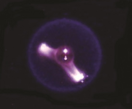 A burning heptane droplet during the Flame Extinguishing Experiments investigation on the International Space Station. (Credit: NASA)